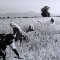 γεωργική γη